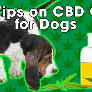 5 Tips on CBD Oil for Dogs