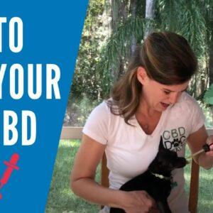 Administering CBD Dog Health Oils