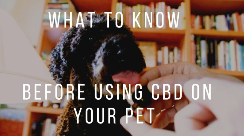 Before Giving CBD to Your Pets: Know This