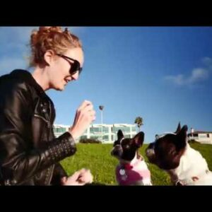Benefits of Hemp CBD Capsules For Dogs