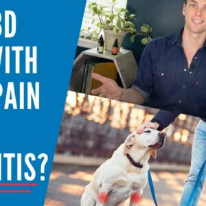 Can CBD help dogs with Arthritis and Joint Pain?