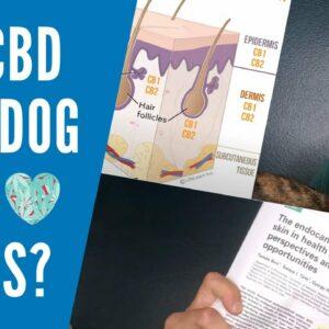 Can CBD Salves Help Dog Skin Issues?