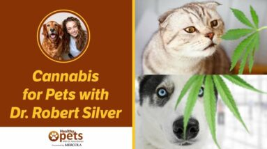 Cannabis for Pets with Dr. Robert Silver