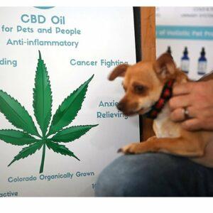 CBD corn dog. Hemp For Dogs