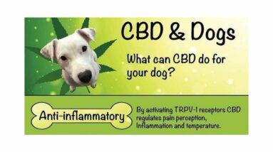 CBD dog cancer