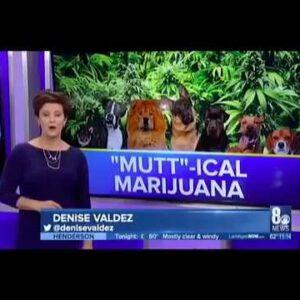 CBD Dog Health CBD Cannabis for Dogs