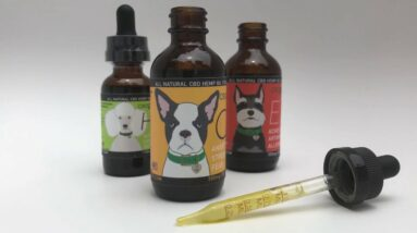 CBD DOG Health Tinctures for Dogs