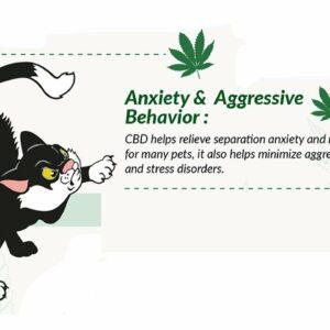 CBD dog separation anxiety