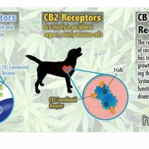 CBD dog treats. Hemp Dog Treats