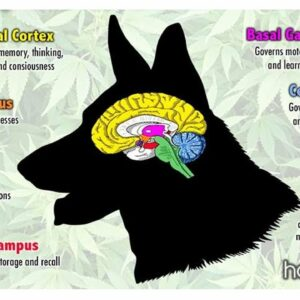 CBD dogs review