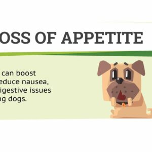CBD dogs separation anxiety