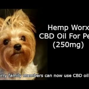 CBD for Dogs and Cats