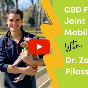 CBD For Joint Pain & Mobility in Dogs with Dr. Zac Pilossoph