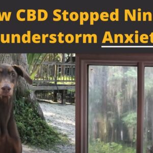 CBD for Thunderstorm Anxiety