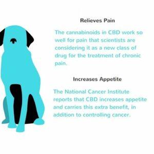 CBD oil cures dogs seizures