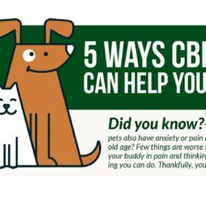 CBD oil dog cancer