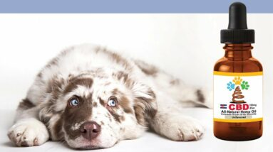 CBD oil dog separation anxiety