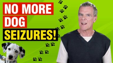 CBD Oil For Dog Seizures (5 Action Steps and 1 AMAZING Remedy)