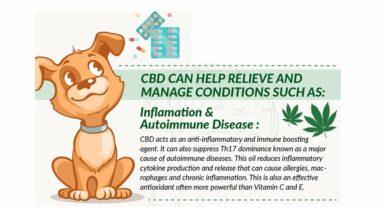 CBD oil for dogs. Hemp Oil For Dogs