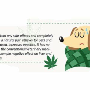 CBD oil for dogs reviews