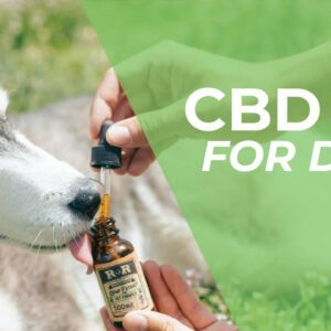 CBD Oil For Dogs - Things You Need To Know