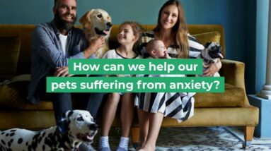 CBD Oil for Pets with Anxiety - The Real CBD | Dogs & Cats