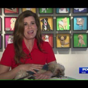 CBD oil treats pets ailments - PIX 11 Change Makers with Tamsen Fadal