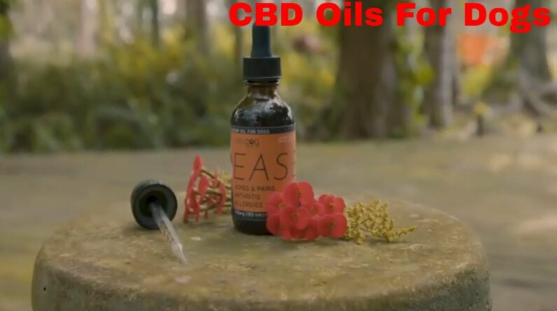 CBD Oils - Exposed Secrets For Arthritis and Anxiety Relief For Pet Dogs!