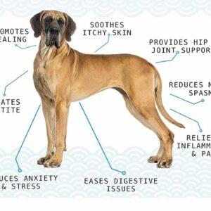CBD spray for dogs