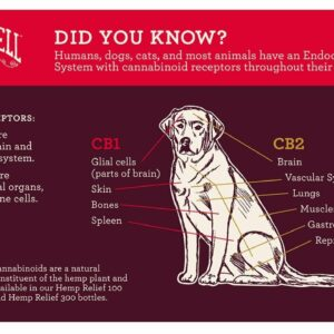 CBD treats for dogs anxiety