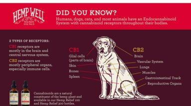 Diy CBD dog treats