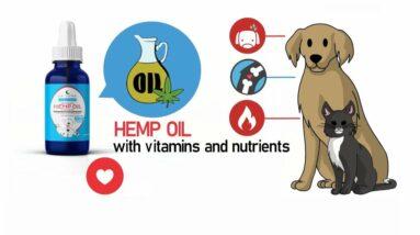 Dog CBD oil treats