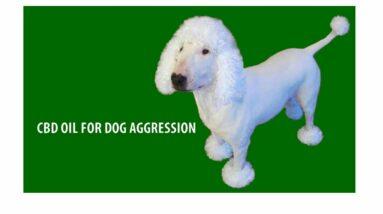 Dog hemp oil. Hemp For Dogs