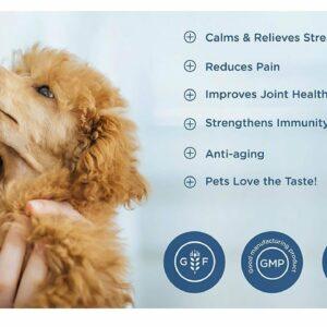 Dog whisperer CBD oil