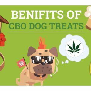 Dog with CBD oil