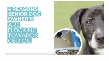 Dogs on CBD treats