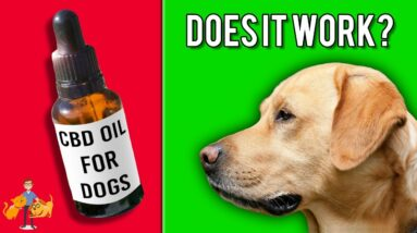 CBD For Dogs - A Miracle Cure for Seizures, Pain + Cancer (what you need to know)?