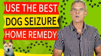 Home Remedies For Seizures In Dogs (CBD is The KEY - Here's Why)