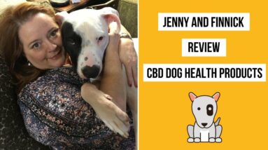 How CBD Helped Finnick's Anxiety and Allergies - CBD Dog Health Review