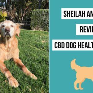 How CBD Helped Simon's Arthritis and Pain - CBD Dog Health Review