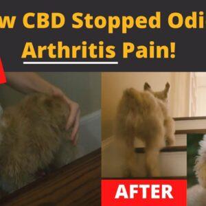 How CBD helps dogs with Arthritis!!