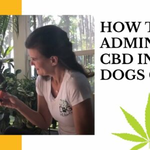 How to Administer CBD Tincture to Dogs Via Gums