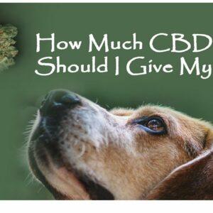 man gives dog CBD oil