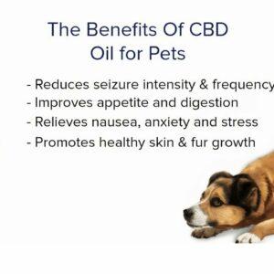 Pet releaf hemp oil. Hemp oil for dogs