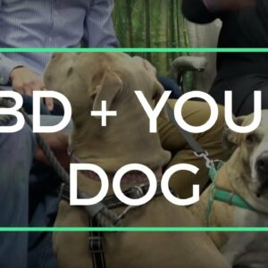CBD + Your Dog: how to utilize CBD for your dog's optimal health and WHY it works!