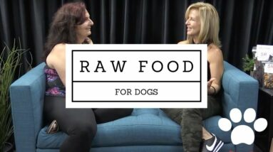 Why RAW NUTRITION + CBD is a powerhouse combination for your dog's health!